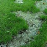 Best DIY Ways to Fix Your Dead Grass